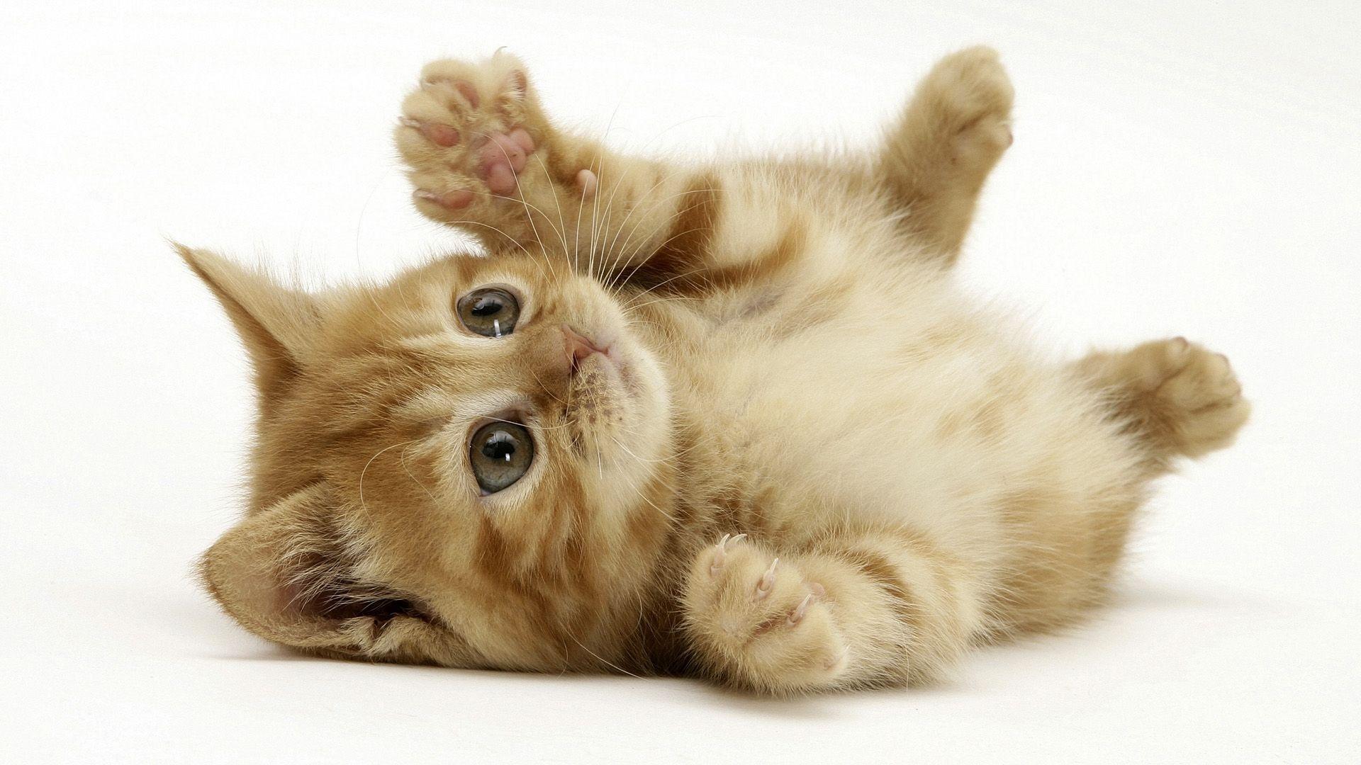 عکس گربه خوشکل و ناز